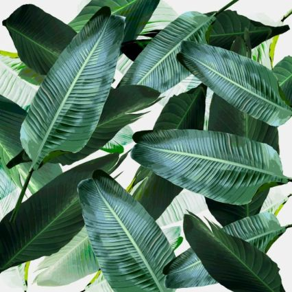 61434c177f4d55ae35a8e658f8026c35--tropical-leaves-banana-leaves